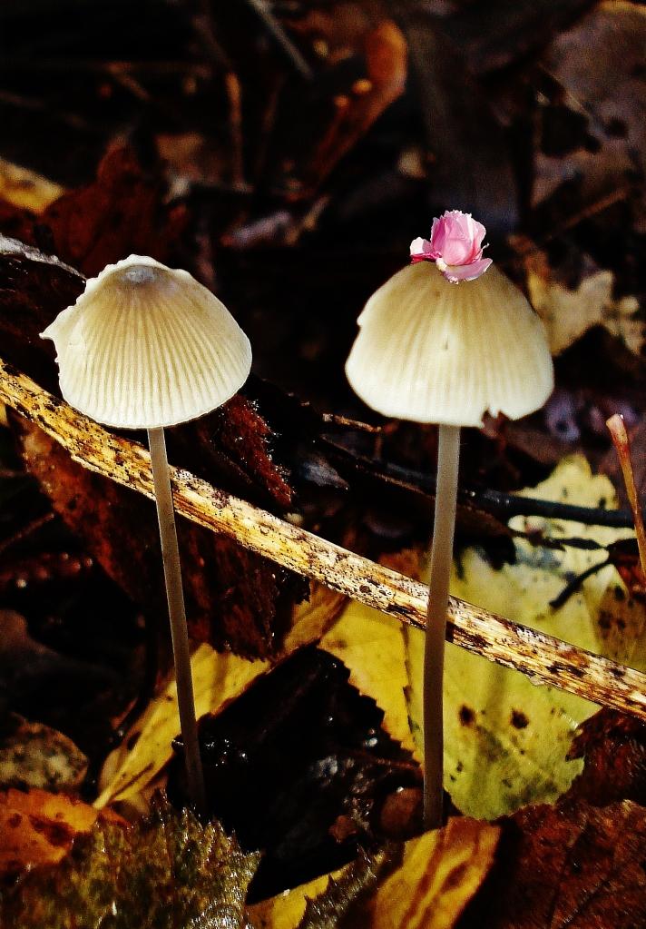 A fairies tale